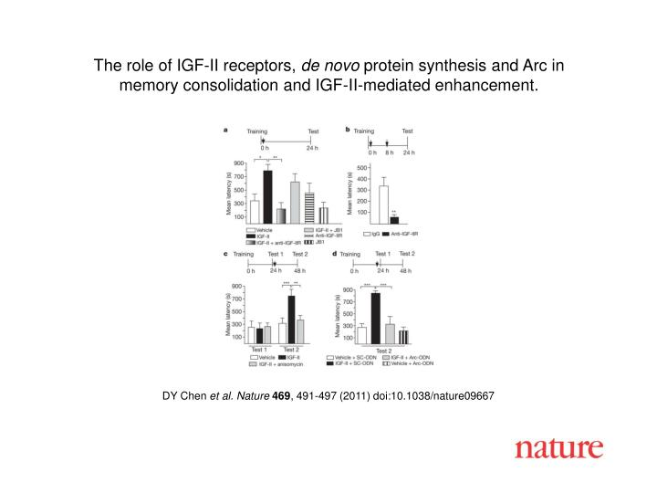 The role of IGF-II receptors,