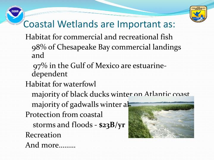 Coastal Wetlands are Important as: