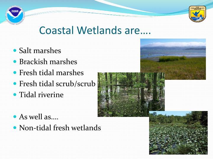 Coastal Wetlands are….