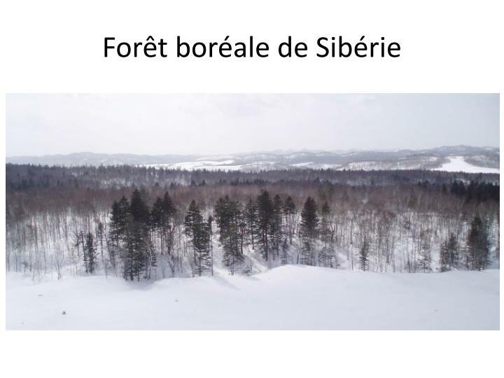 Forêt boréale de Sibérie
