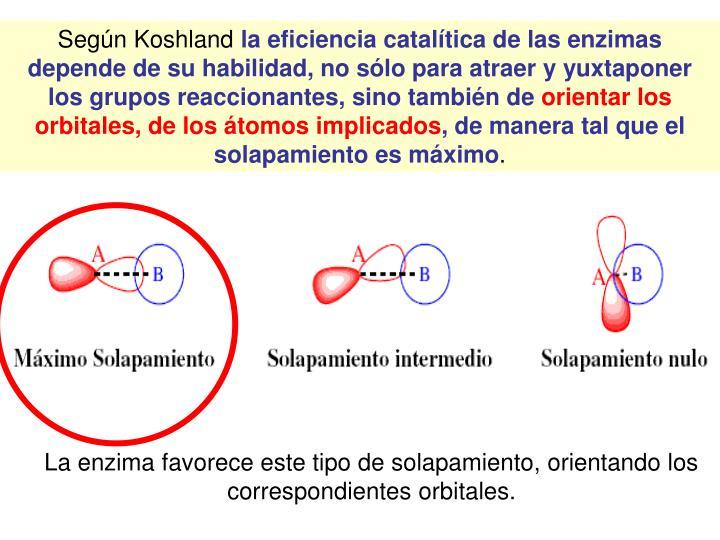La enzima favorece este tipo de solapamiento, orientando los correspondientes orbitales.