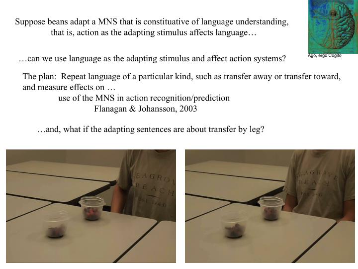 Suppose beans adapt a MNS that is constituative of language understanding,       that is, action as the adapting stimulus affects language…