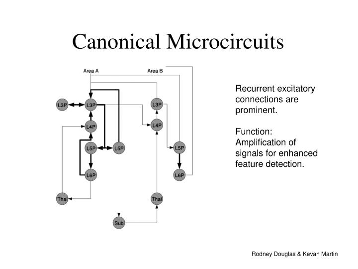 Canonical Microcircuits