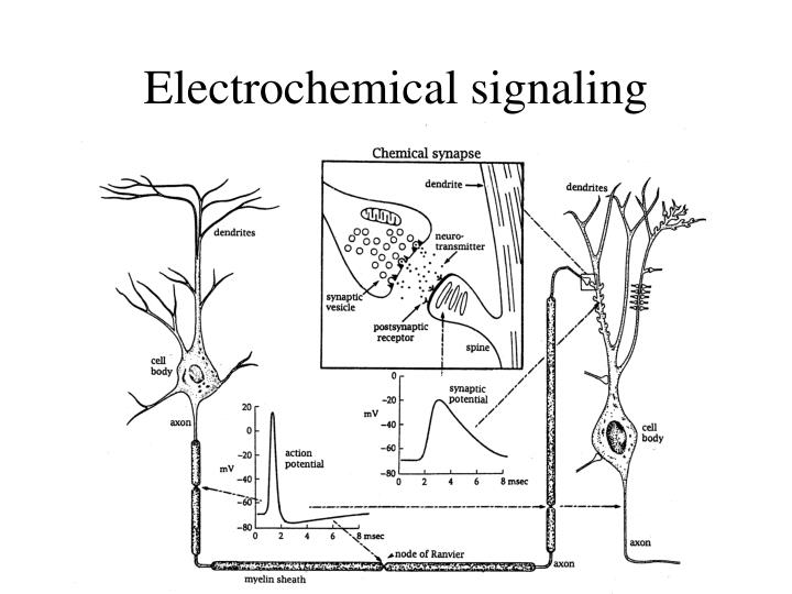 Electrochemical signaling