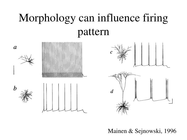 Morphology can influence firing pattern