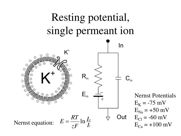 Resting potential,