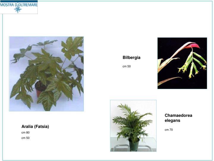 Bilbergia