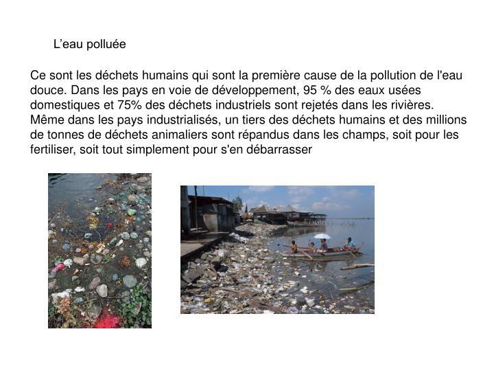 L'eau polluée