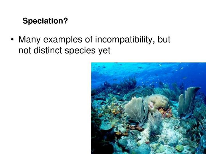 Speciation?