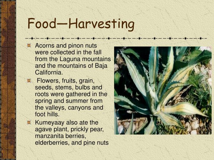 Food—Harvesting