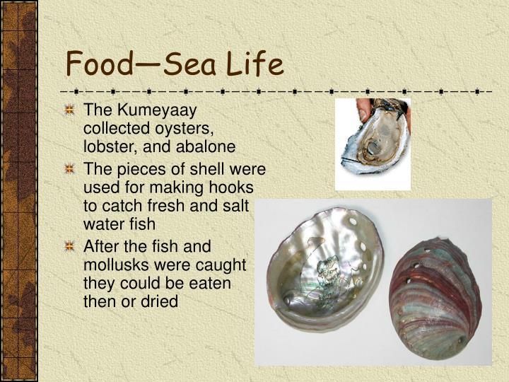 Food—Sea Life