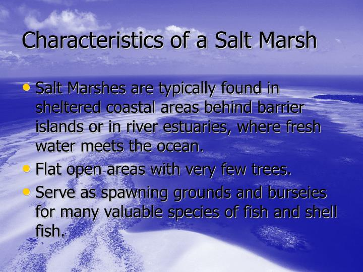 Characteristics of a Salt Marsh