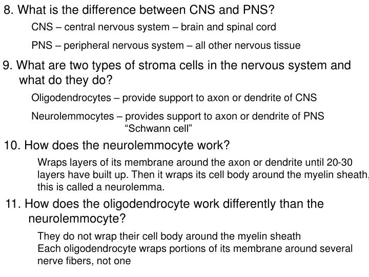 8. What is the difference between CNS and PNS?