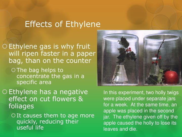 Effects of Ethylene