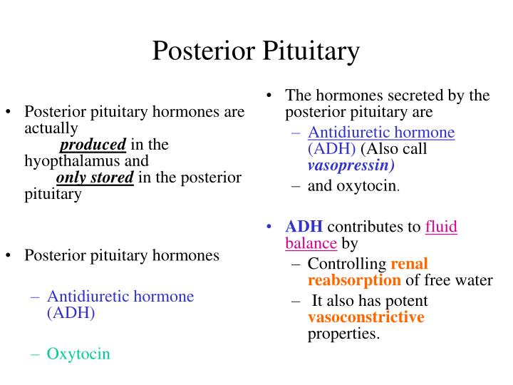 Posterior pituitary hormones are actually