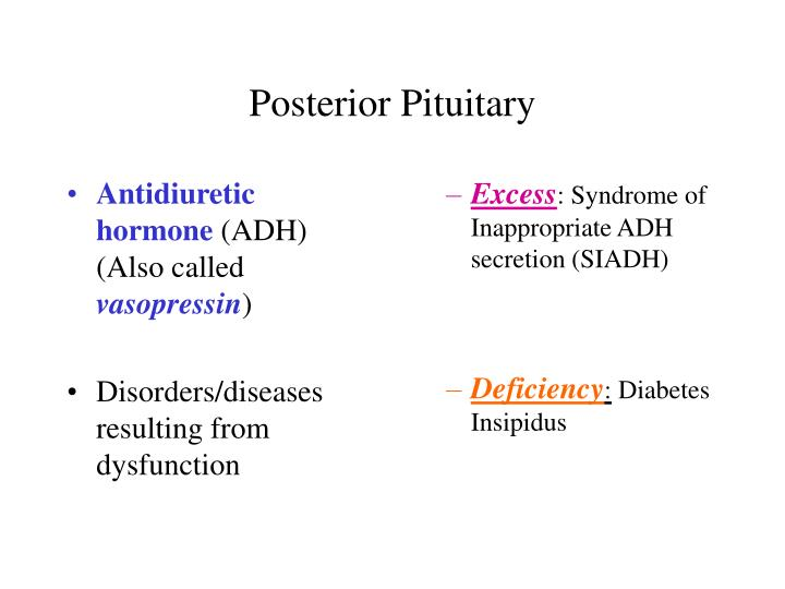 Posterior pituitary1