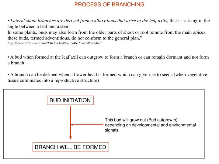 PROCESS OF BRANCHING