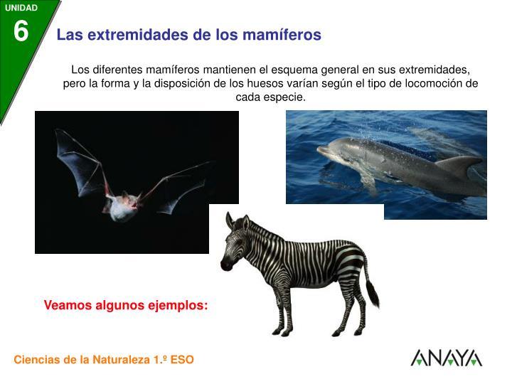 Los diferentes mamíferos mantienen el esquema general en sus extremidades, pero la forma y la disposición de los huesos varían según el tipo de locomoción de cada especie.