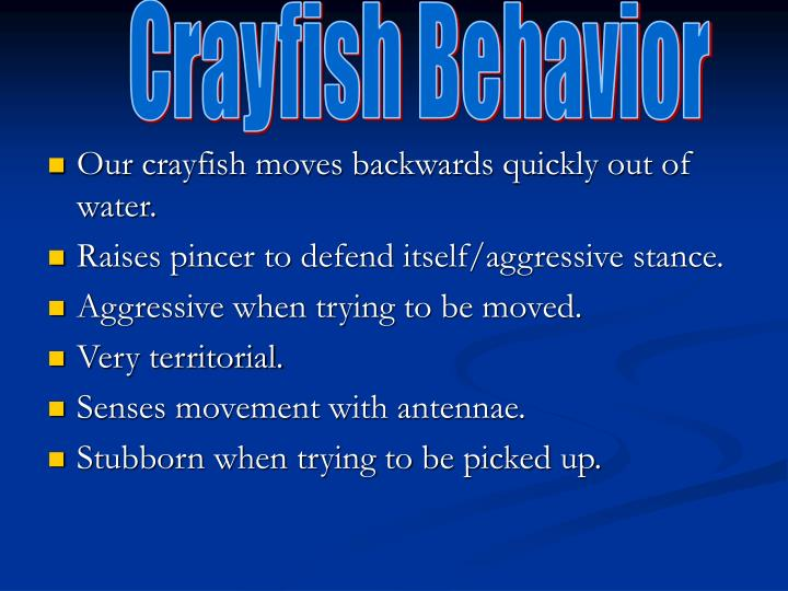 Crayfish Behavior