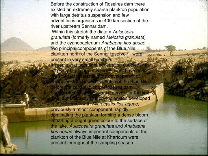 Before the construction of Roseires dam there existed an extremely sparse plankton population with large detritus suspension and few adventitious organisms in 400 km section of the river upstream Sennar dam.