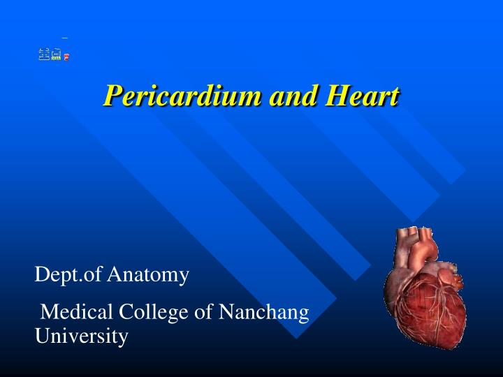Pericardium and heart
