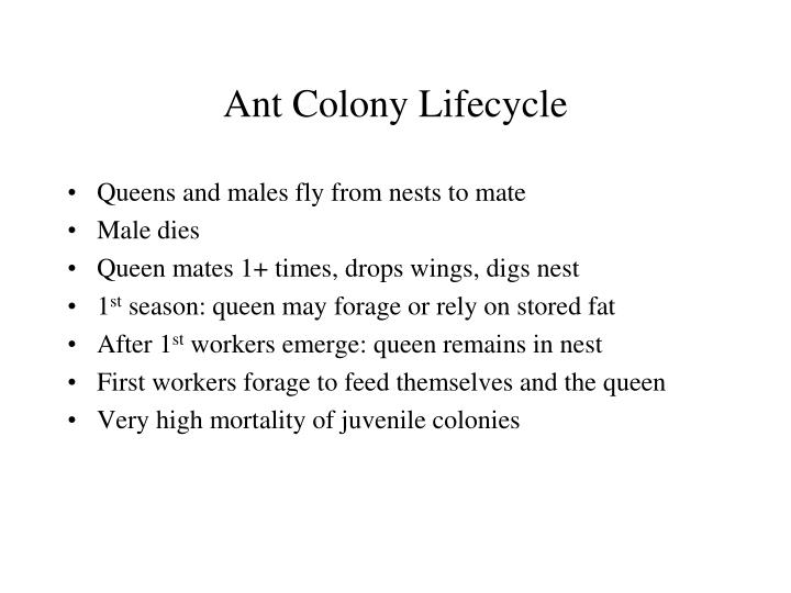 Ant Colony Lifecycle
