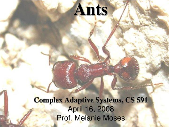 Ants complex adaptive systems cs 591 april 16 2008 prof melanie moses