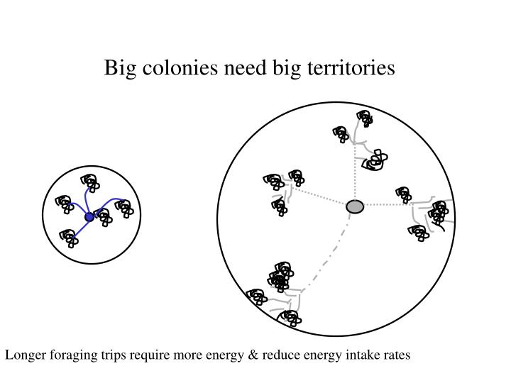 Big colonies need big territories