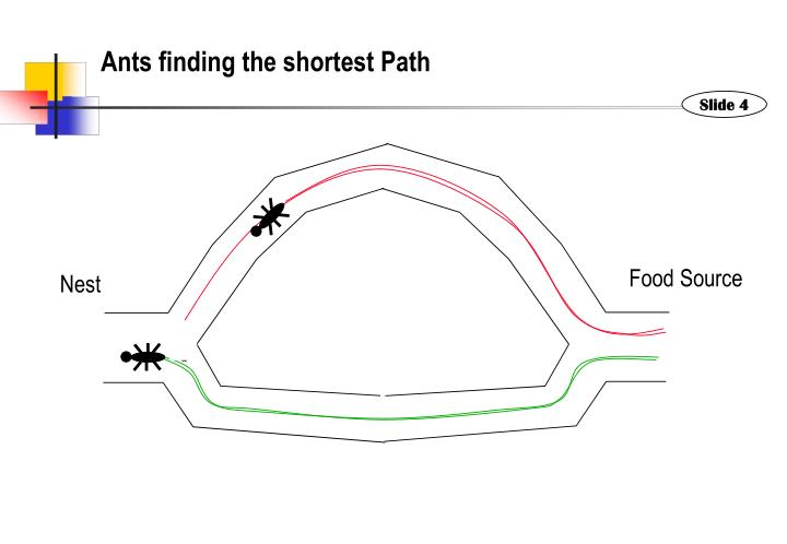 Ants finding the shortest Path