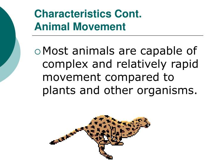 Characteristics cont animal movement