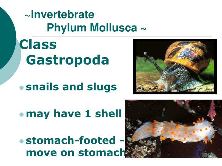 ~Invertebrate