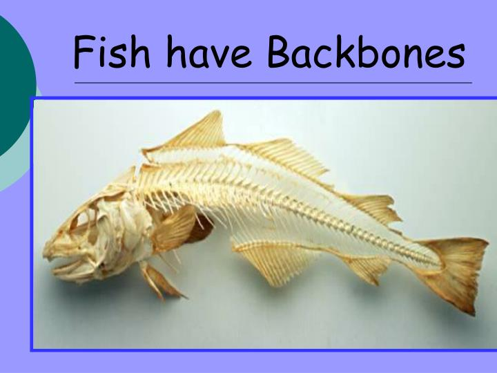 Fish have Backbones
