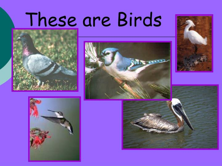 These are Birds