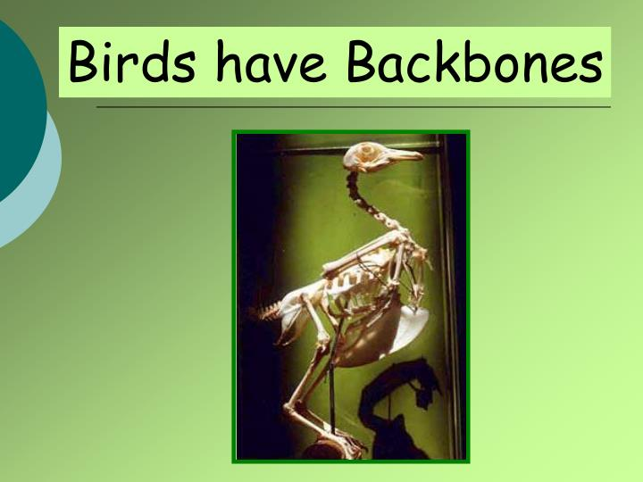Birds have Backbones