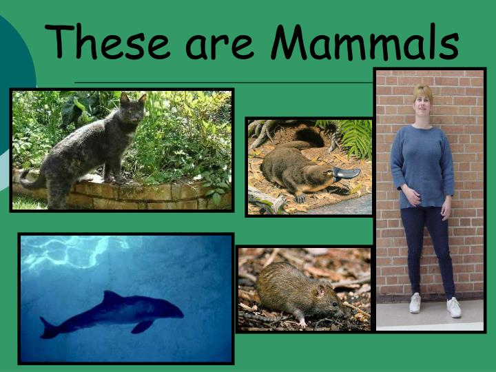 These are Mammals
