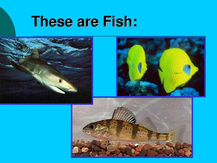 These are Fish: