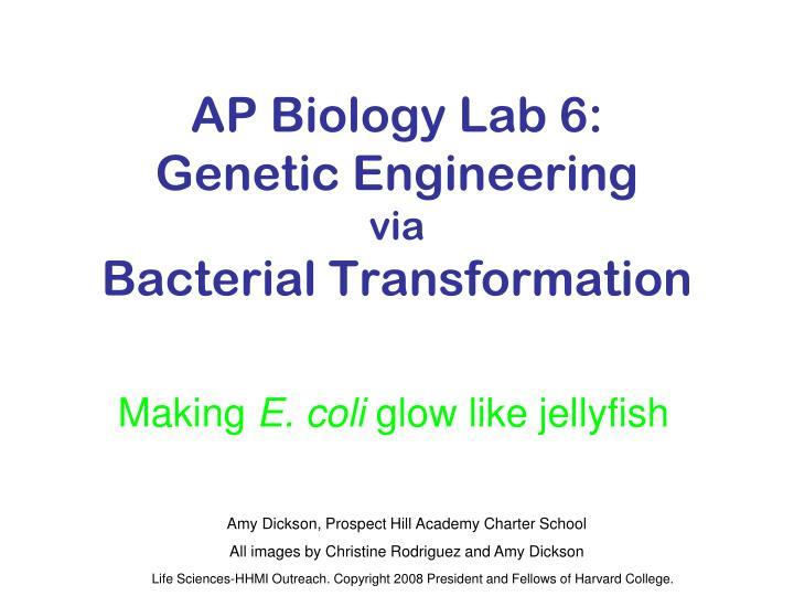 AP Biology Lab 6: