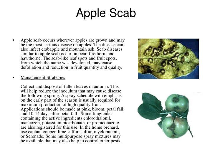 Apple Scab