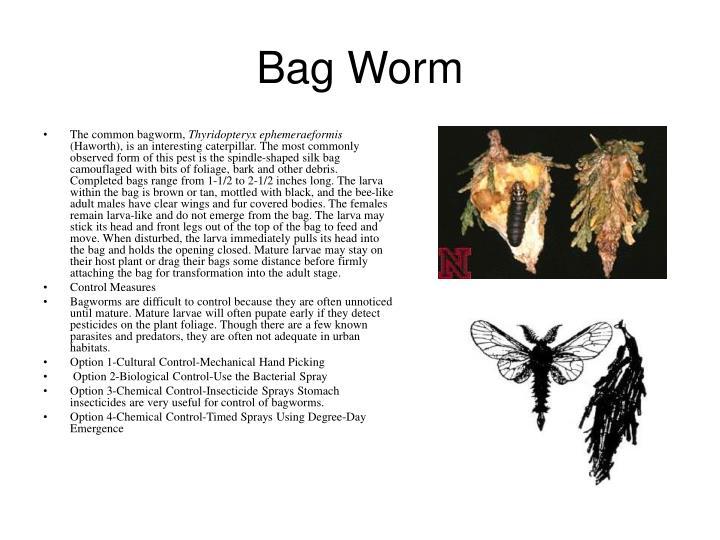 Bag Worm