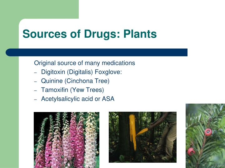 Sources of Drugs: Plants