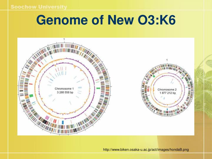 Genome of New O3:K6