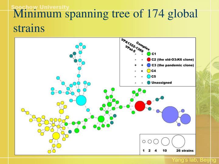 Minimum spanning tree of 174 global strains