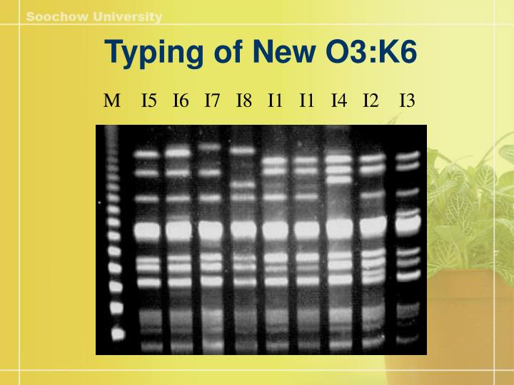 Typing of New O3:K6