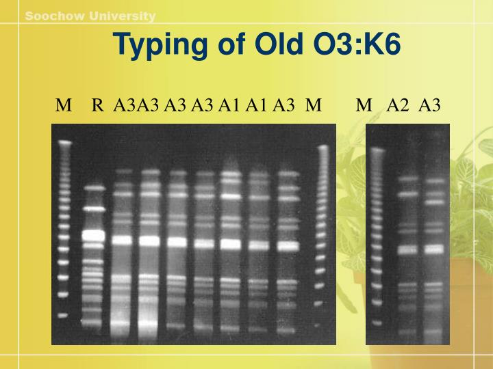 Typing of Old O3:K6