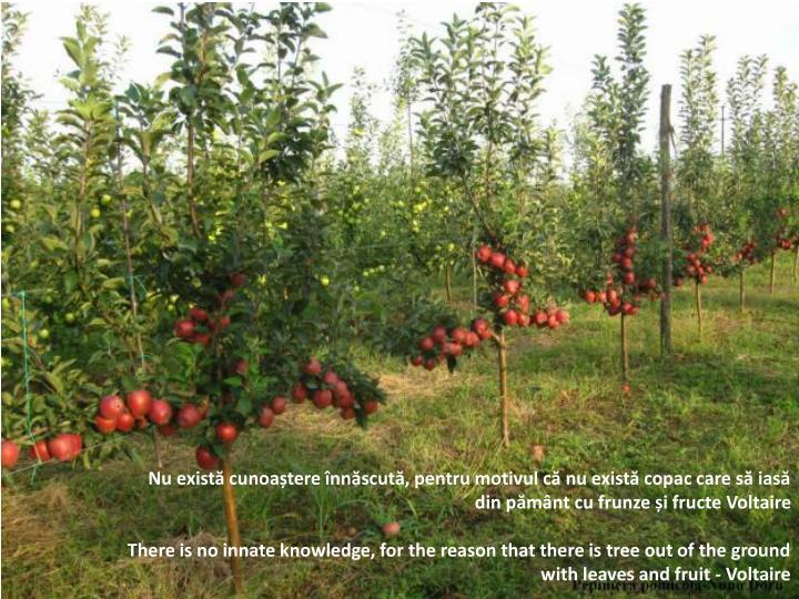 Nu există cunoaștere înnăscută, pentru motivul că nu există copac care să iasă din pământ cu frunze și fructe Voltaire