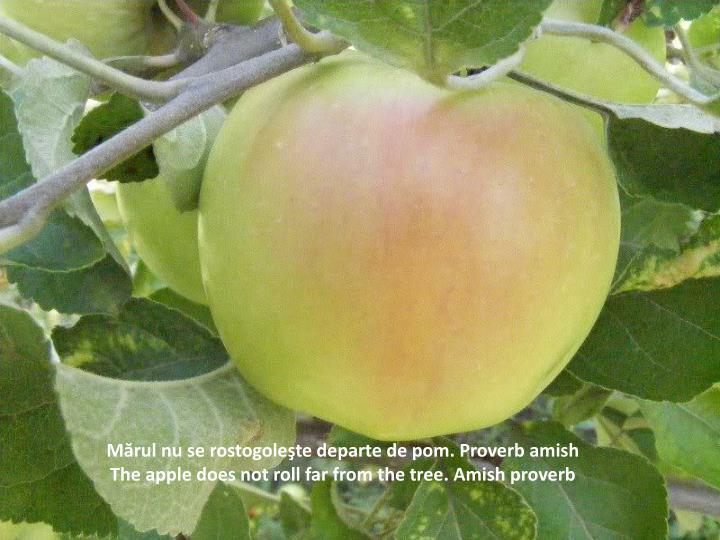 Mărul nu se rostogoleşte departe de pom. Proverb amish