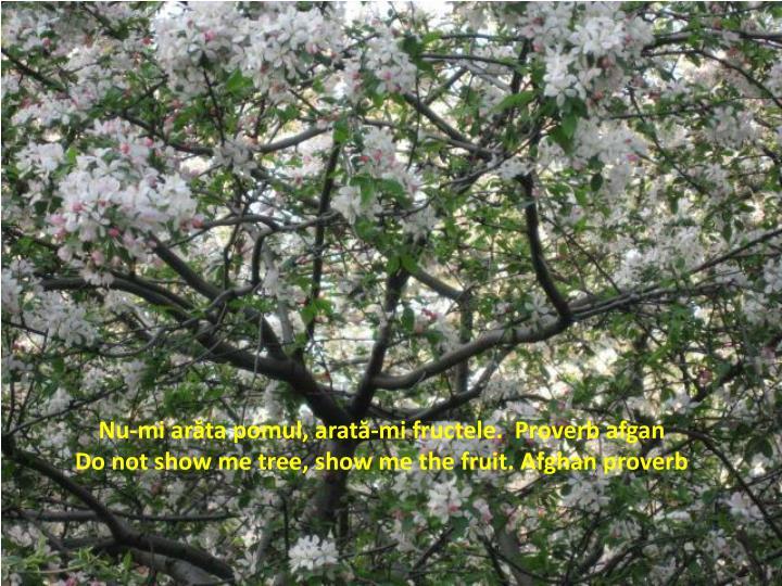 Nu-mi arăta pomul, arată-mi fructele.  Proverb afgan