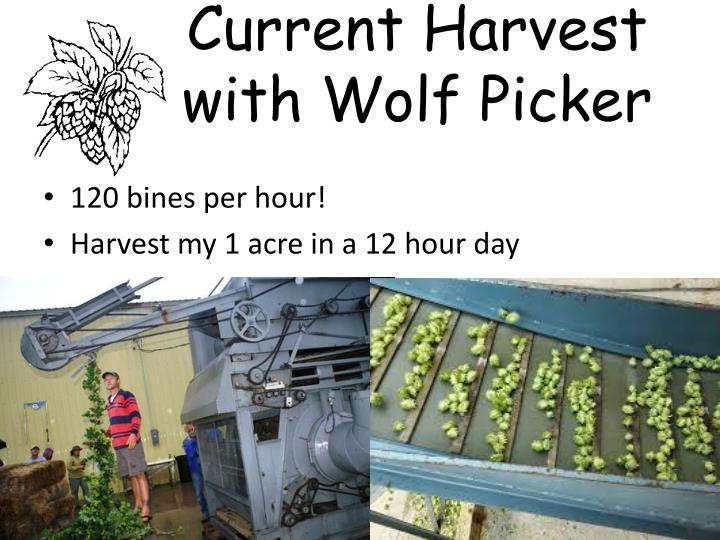 Current Harvest with Wolf Picker