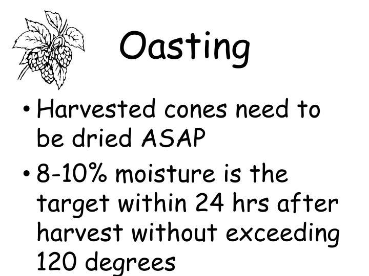 Oasting
