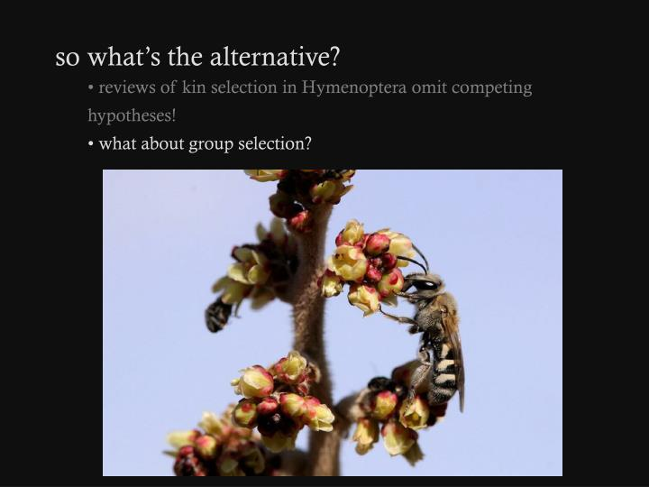 so what's the alternative?